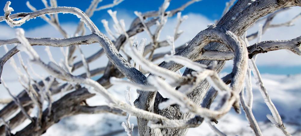 Canberra to Thredbo Snow Transfer